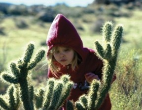 San Diego Cactus Kid Discoveries