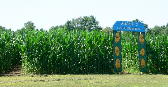 Liberty Ridge Farm New York Corn Maze