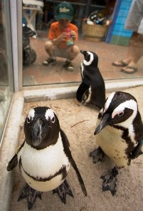 Penguin Beach at Lowry park Zoo Tampa