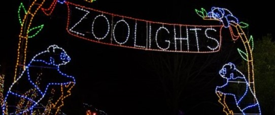 National Zoo Washington DC ZooLights