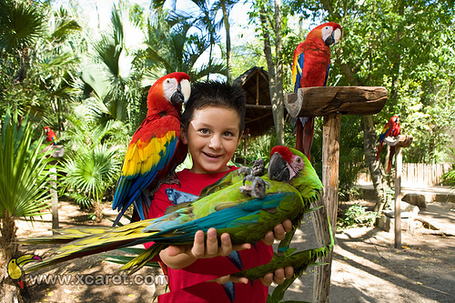 Xcaret Eco Adventure Parks with Toucans and parrots