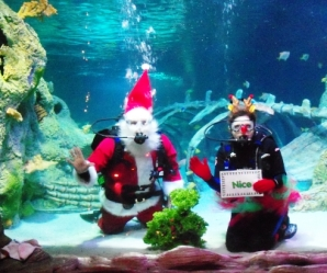 Grapevine Texas Scuba Santa at Sea Life Aquarium