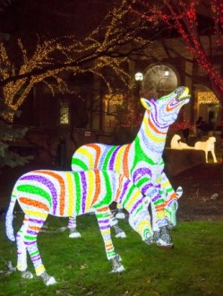 Holiday Zebora Lights at Lincoln Park Zoo in Chicago