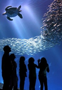 Monterey Bay Aquarium Family Adventures