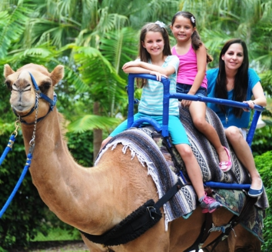 Zoo Miami Camel Rides for Kids