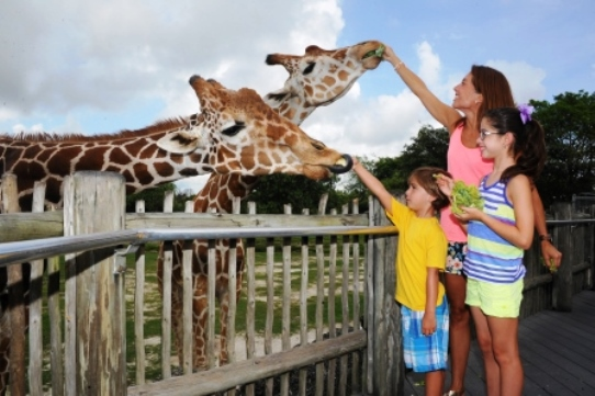 Zoo Miami Giraffe Feeding Family Fun