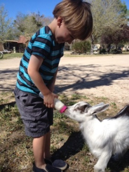Camatta Ranch Goat Encounter in California