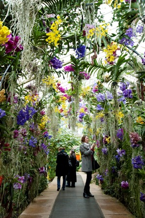 Kew Gardens London Tropical Festival Things To Do With Kids