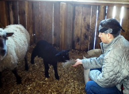 Secret Family Vacation Place - Lamb Feeding at Maple House B&b in Massachusetts