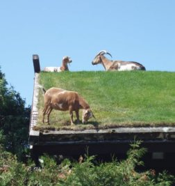 Door County Secret Family Vacation Place with Goats on the Roof.