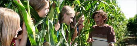 Northern California Corn Mazes Festivals