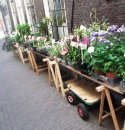 Amsterdam Street Flowers The Family Files