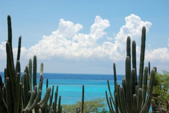 Aruba Cactus and Caribbean Sea