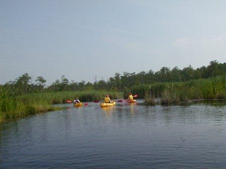 Eco Sport Back Bay Kayaking Virginia Beach
