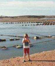 Puerto Penasco Mexico Oyster Beds